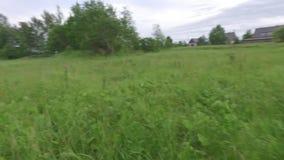 Cão que corre ao longo do campo verde Metragem constante lisa da câmera Movimento lento vídeos de arquivo