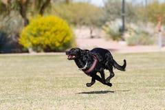 Cão que corre através de um parque Imagens de Stock Royalty Free
