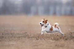 Cão que corre e que joga no parque fotografia de stock