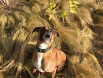 Cão que corre na grama fotografia de stock royalty free