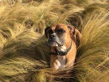 Cão que corre na grama foto de stock