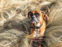 Cão que corre na grama imagem de stock royalty free