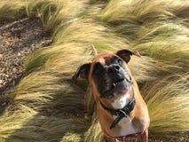 Cão que corre na grama imagem de stock