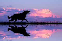 Cão que corre no por do sol ilustração royalty free