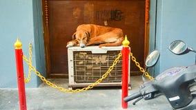 Cão que descansa fora na unidade de condicionamento de ar Imagens de Stock Royalty Free