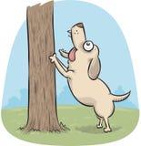Cão que descasca acima de uma árvore Foto de Stock Royalty Free