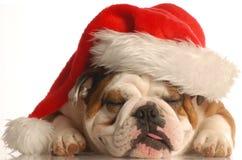 Cão que desgasta o chapéu de Santa fotografia de stock