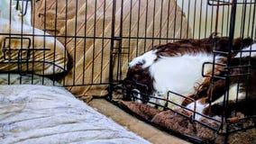 Cão que dorme em um canil fotos de stock