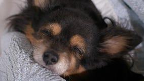 Cão que dorme em uma cama filme
