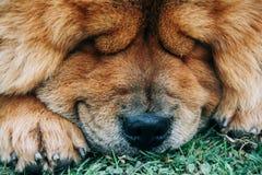 Cão que dorme fora imagem de stock
