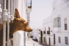 Cão que embebe acima o sol Fotos de Stock Royalty Free