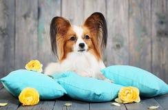 Cão que encontra-se em descansos fotos de stock royalty free