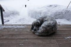 cão que encontra-se em uma varanda de madeira e que corre afastado o gato imagens de stock royalty free
