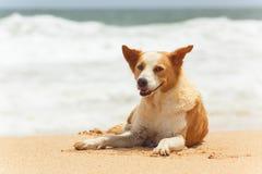 Cão que encontra-se na areia Imagem de Stock Royalty Free