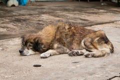 Cão que encontra-se na terra Fotos de Stock