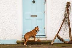 Cão que espera em uma porta da rua Fotos de Stock Royalty Free