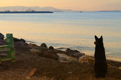 Cão que espera no porto fotos de stock