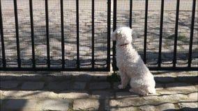 Cão que espera pela cerca filme