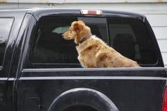 Cão que espera seu mestre foto de stock
