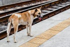 Cão que está a estrada de ferro próxima Imagens de Stock