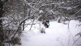Cão que funciona através da neve vídeos de arquivo
