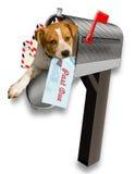 Cão que fura fora da caixa postal. Imagem de Stock