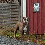 Cão que guarda a casa Imagem de Stock