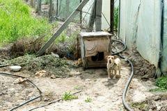 Cão que guarda a jarda dos ladrões canine Cão ao ar livre foto de stock royalty free