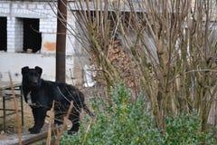 Cão que guarda a propriedade Fotos de Stock Royalty Free