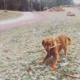 Cão que joga em um parque Foto de Stock Royalty Free