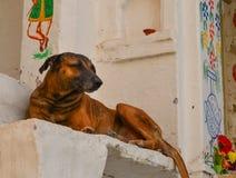 Cão que joga na cidade velha fotografia de stock royalty free