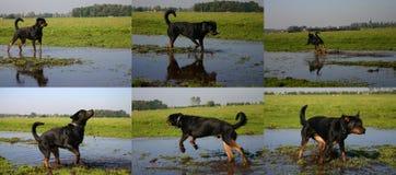 Cão que joga na lama foto de stock