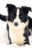 Cão que joga na neve. Fotografia de Stock Royalty Free