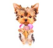 Cão que lambe com gelado Foto de Stock