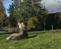 Cão que mantém um jardim visto de atrás imagens de stock