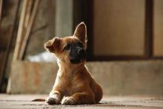 Cão que olha acima Imagens de Stock