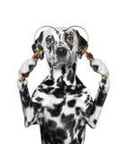 Cão que olha através de um loup da lupa Fotografia de Stock Royalty Free