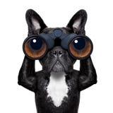 Cão que olha através dos binóculos Fotos de Stock