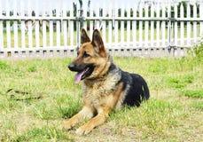 Cão que olha lateralmente foto de stock royalty free