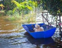 Cão que olha no transbordamento foto de stock