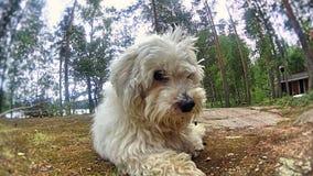 Cão que olha o! fotografia de stock royalty free