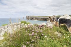 Cão que olha o mar com flores foto de stock royalty free