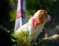 Cão que olha para fora da elevação acima Fotografia de Stock Royalty Free
