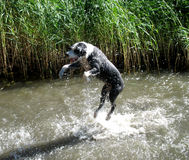 Cão que pendura ao redor Imagens de Stock Royalty Free