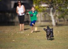Cão que persegue uma bola Fotografia de Stock Royalty Free