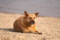 Cão que relaxa Fotos de Stock