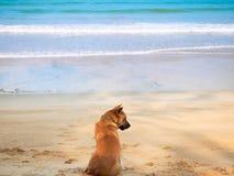 Cão que relaxa na praia Imagens de Stock