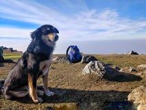 Cão que senta-se ao lado das rochas no cume da montanha fotos de stock royalty free