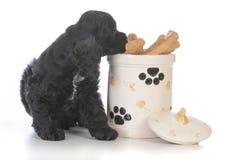 cão que senta-se ao lado do frasco de cookie Foto de Stock