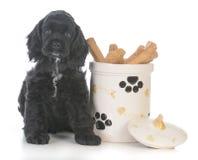 cão que senta-se ao lado do frasco de cookie Fotografia de Stock
